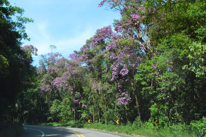 rodovia-oswaldo-cruz